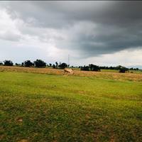Cần bán lô 2ha nằm ngay đường liên huyện của tỉnh, đất đẹp bằng phẳng sổ đỏ riêng