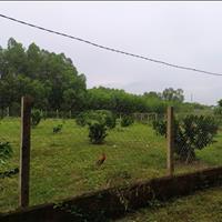 Kẹt vốn bán nhanh 1559m2 đất trồng chanh giá 970tr sổ hồng
