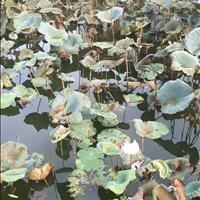 Đất mặt hồ hoa sen 81m2 tại Nam Hồng, Đông Anh