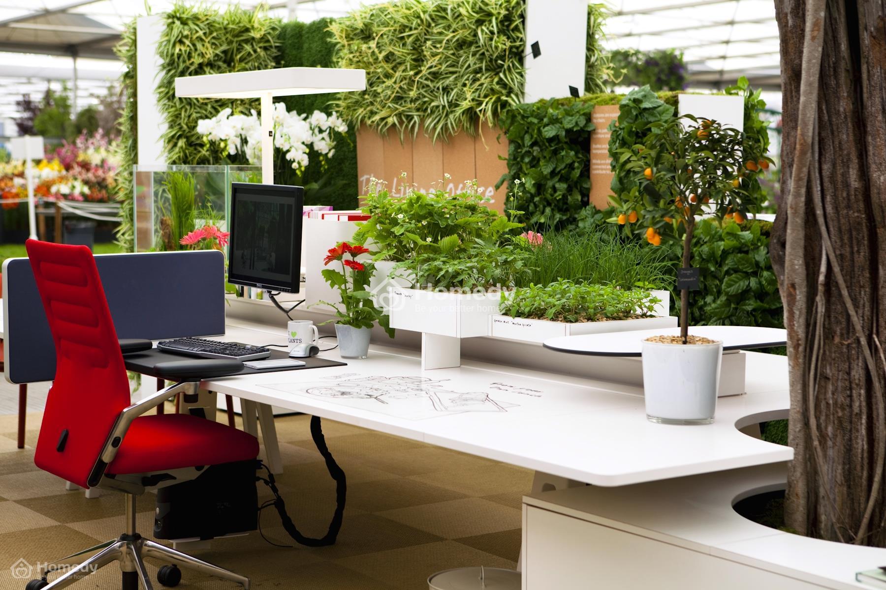 Trang trí cây phong thủy trên bàn làm việc