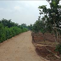 Bán đất vườn nghỉ dưỡng Cẩm Mỹ - Đồng Nai giá 460 triệu