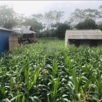 Bán đất nghỉ dưỡng view cánh đồng và núi tại Yên Bình, Thạch Thất, 792m2, giá hơn 1 tỷ