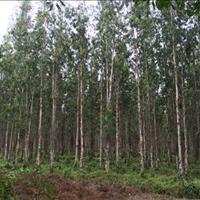 Đất Vườn Tràm ngay thị trấn, mặt tiền bê tông 5m, diện tích 500m2 giá 650 triệu