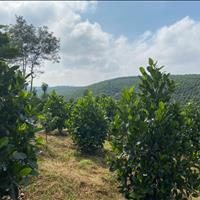 Cần vốn làm ăn bán gấp mảnh vườn đang trồng cây ăn trái, giáp suối view tuyệt đẹp ngay trung tâm