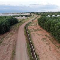 Bán đất nông nghiệp Hồng Thái, Bắc Bình ngay 2 đường liên huyện giá chỉ 100k/m2 Lh 0938..67..79..09