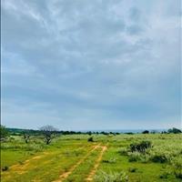 Bán lô đất xã Phan Rí Thành 10921m2, sổ cây lâu năm, cách biển 3 phút đi xe máy, liên hệ