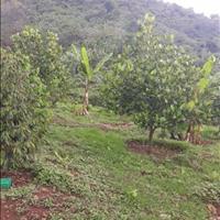 Cần bán vườn trái cây giá 260tr/sào, đất đỏ đẹp, đường thông thoáng, view đẹp làm nghỉ dưỡng