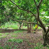 Chính chủ cần bán 2000m² đất vườn trái cây cho thu hoạch tốt, cây 10 năm tuổi