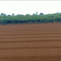 Bán 12ha đất công nghiệp 50 năm tại Huyện Tứ Kỳ, Tỉnh Hải Dương