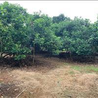 Bán đất Bình Lộc Long Khánh - Đồng Nai giá 800.00 triệu