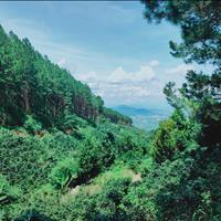 Đất lâm nghiệp thôn 9 Mê Minh 60 triệu/sào - giấy tay có xác nhận trưởng thôn và ký giáp ranh