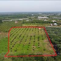 Chính chủ bán đất vườn nhãn giá rẻ cách suối nước nóng Bình Châu 1.5km