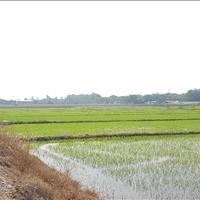 Đất vườn Củ Chi nằm ngay khu công nghiệp Tây Bắc