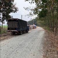 Bán gấp đất chính chủ 1ha cao su thuộc Minh Lập - Chơn Thành