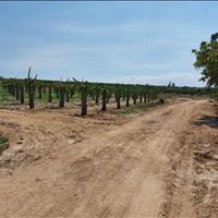 Bán 27,331m2 đất nông nghiệp Hồng Thái gần cây cô đơn giá chỉ 75k/m2 Lh 0938..67..79..09 Hiền