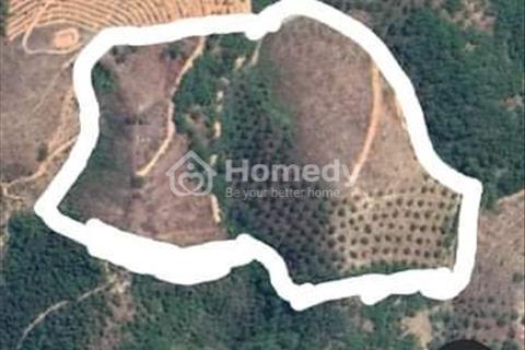 Đất vườn trồng cây ăn trái Thị trấn Đạ Tẻh, Huyện Đạ Tẻh, Lâm Đồng