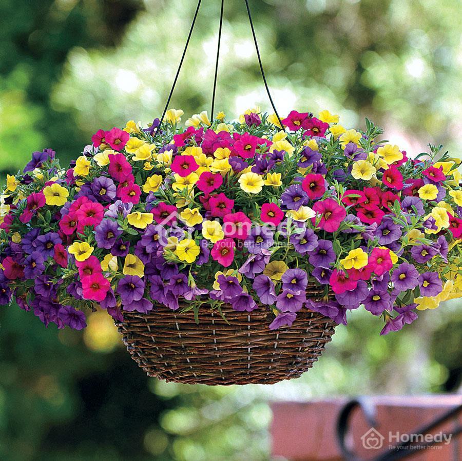 hoa-trong-tren-san-thuong