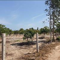 Bán 6.5 công đất Tân Bình, thị xã LaGi giá rẻ nhất