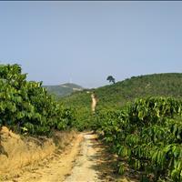 Bán vườn Lộc Châu, view toàn cảnh, thích hợp nghỉ dưỡng