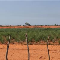 2 lô đất nông nghiệp hồng thái, vị trí đẹp giá thấp cho khách tài chính thấp Lh 09386.. 77909 Hiền
