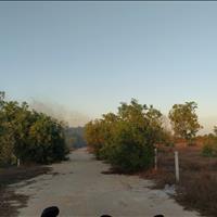 Bán 1147m2 đất Biển Tân Bình, thị xã LaGi sinh lời nhanh