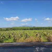 Bán 7.5 hecta đất Cù Chính Lan, Tân Bình, thị xã LaGi giá tốt