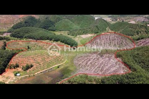 7,89ha đất đồi triền có thế đẹp, Quốc Oai, Huyện Đạ Tẻh, Lâm Đồng