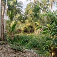 Cần bán đất, vườn trái cây nghỉ dưỡng tại Trà Cổ, Quận Tân Phú, Đồng Nai 350tr/sào