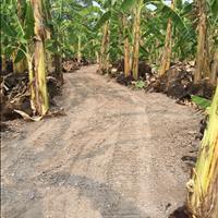 Bán đất rẫy cách đường nhựa 1km dễ đi giá chỉ 220.000.000/sào