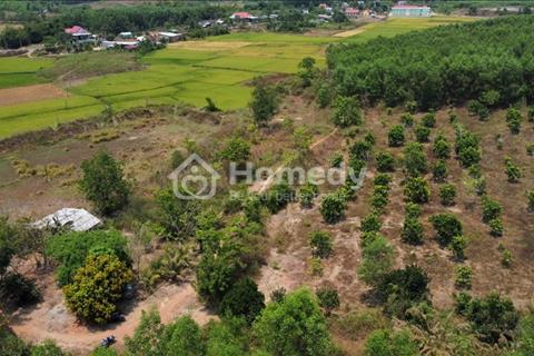 Lô góc 10.000m2 cây lâu năm Khánh Bình - Đang trồng bưởi đã có trái - Đường oto tận đất