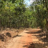 Bán đất vườn Lộc Thành Lộc Ninh Bình Phước - 12x85m - 1000m2