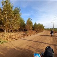 Bán 2.8 hecta đất đường Bãi Rác - Tân Bình - TX LaGi sổ hồng riêng