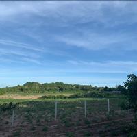 Bán 1000m2 đất vườn tại Xuyên Mộc – Bình Châu thích hợp làm nhà vườn,homestay,Đất Phủ Hồng,Giá 2 tỷ