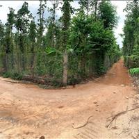 Bình Giã 2,4 sào 35m mặt tiền đường ô tô bê tông và đất