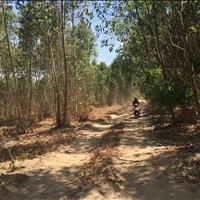 Bán 8 sào đất Tân Bình - Thị xã La Gi chính chủ gần trung tâm hành chính