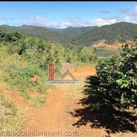 Bán đất khu vực Đạ Sa – Lạc Dương, diện tích lớn, thích hợp cho việc vừa ở vừa canh tác nông nghiệp