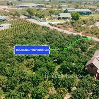Chính chủ lô đất 1,3 mẫu mt Nguyễn Minh Châu, có sẵn vườn bưởi, gần hồ lớn Lagi 719