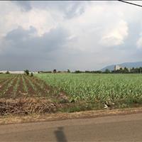 Bán 2 mẫu đất đường Thọ An - Bảo Quang - Long Khánh sổ riêng
