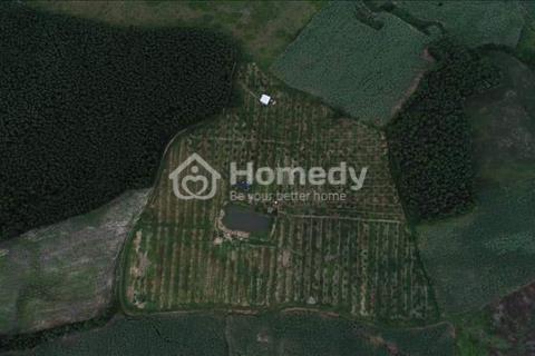 Lô đất rẫy Ninh Thượng đang có cây ăn trái 4.2ha chỉ 1 tỷ 350 triệu