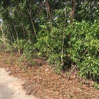 Bán 1.8 ha đất mặt tiền Lương Định Của  - TX LaGi chính chủ