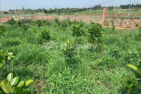 Bán vườn mít Trảng Bom 1000m2 sổ riêng giá 880 triệu . Cách Biên Hòa 20km.