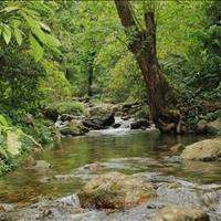 Bán đất vườn Bình Long giá rẻ 2000m2 giá rẻ sổ sẵn