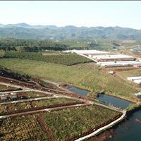 Đất thổ cư, đất nền nghỉ dưỡng đồi chè Tâm Châu, TP Bảo Lộc, đầu tư an toàn, sinh lời ngay