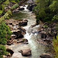 Bán Đất vườn Bình Long giá rẻ 2000m2 giá rẻ - Sổ sẵn