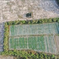 Bán đất thổ cư mặt tiền Vành đai 3 Phú Thạnh - Nhơn Trạch - Đồng Nai giá thỏa thuận