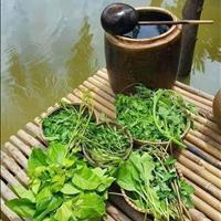 Bán đất vườn thị xã Bình Long khu biệt thự 1000m2, 180tr (ngân hàng hỗ trợ 50%) sổ sẵn