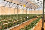 Dự án Nam Á Garden - ảnh tổng quan - 7