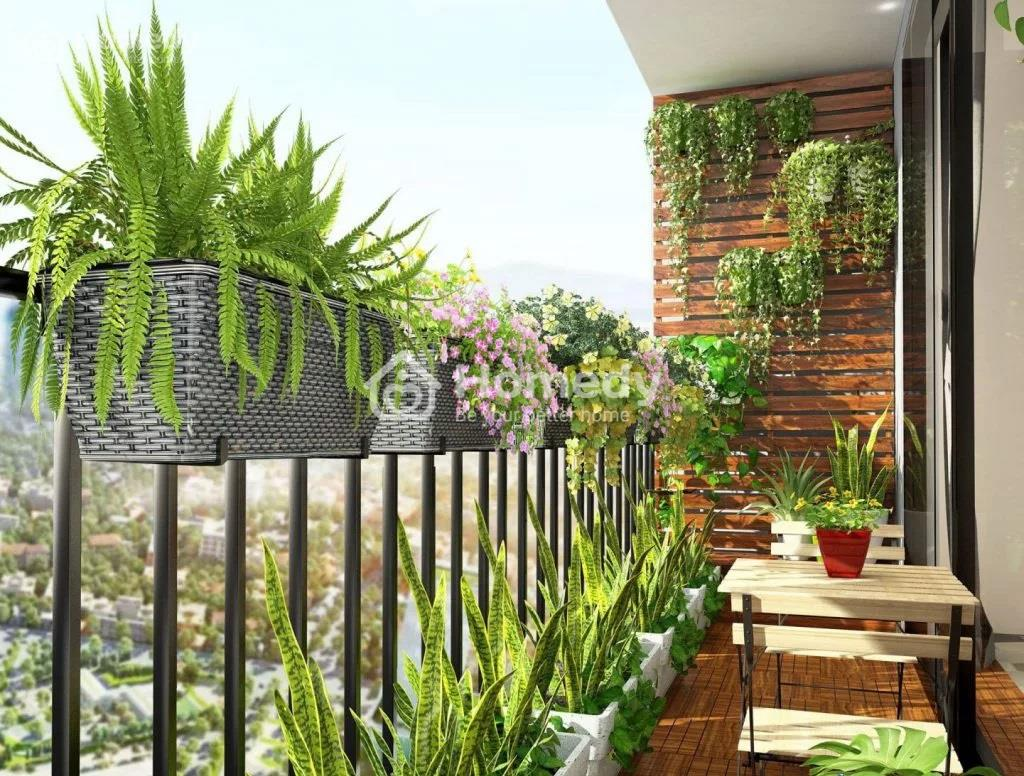 Ban công chung cư nên trồng cây gì?