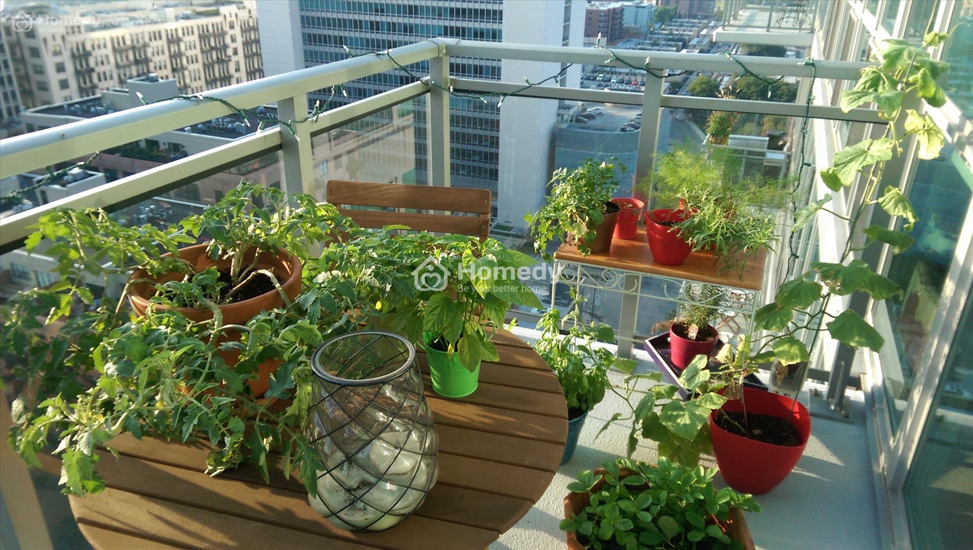 Tận dụng ban công trồng nhiều loại rau xanh