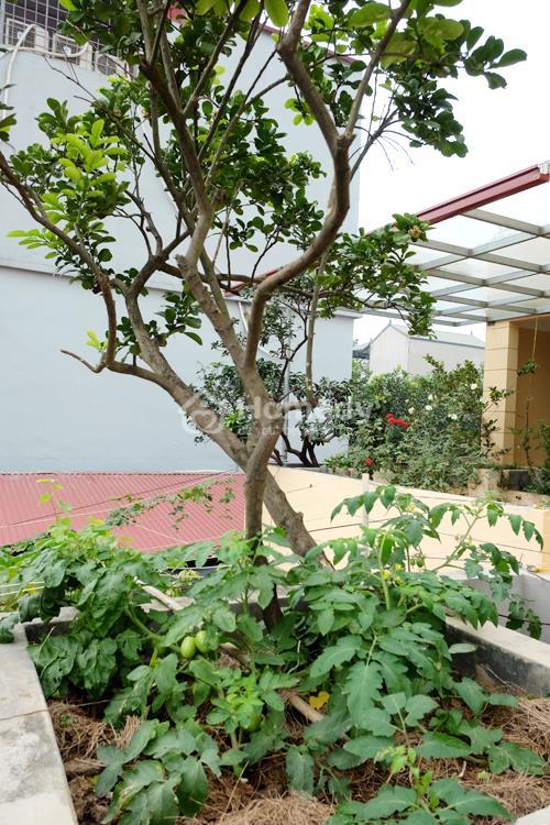 vườn cây